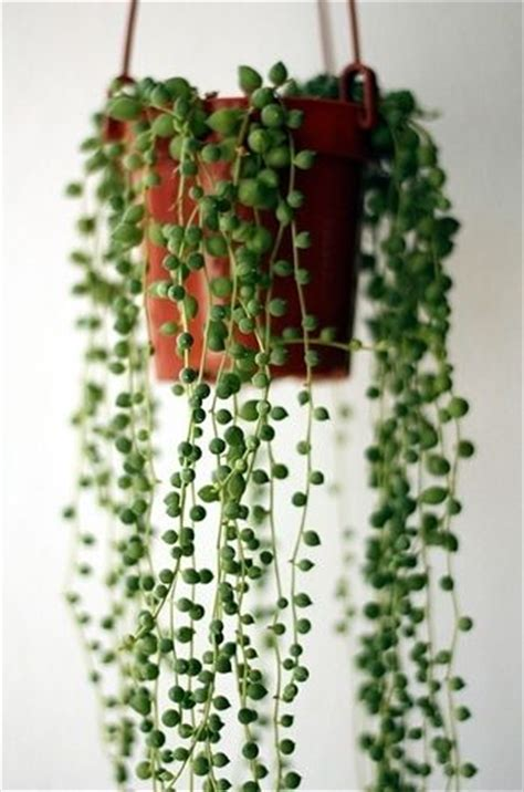 indoor vine plants 17 houseplants you need right now plante d