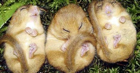 sognare un topo in casa significato dei sogni sognare animali i topi