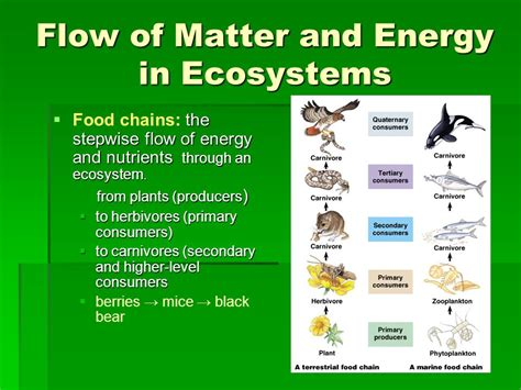 pattern of energy and matter flow principles of ecology you will describe ecology and the