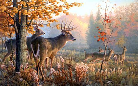 buck the deer buck wallpaper