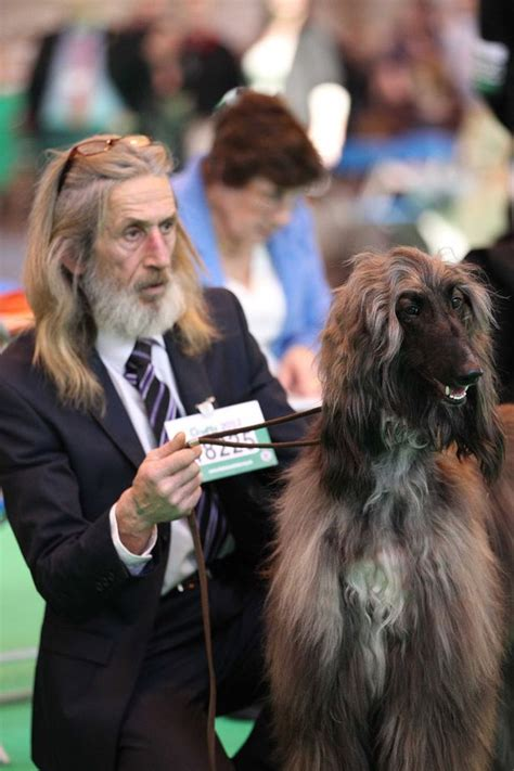 dogs look like owners dogs that look like their owners from crufts 2012 mirror