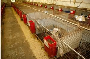 where does petland get their puppies naperville puppy mill outlet capital or friendly city