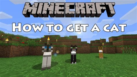 how to get a and cat to get along minecraft how to get a cat