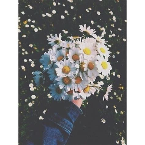 imagenes tumblr margaritas resultado de imagen para margaritas y girasoles tumblr