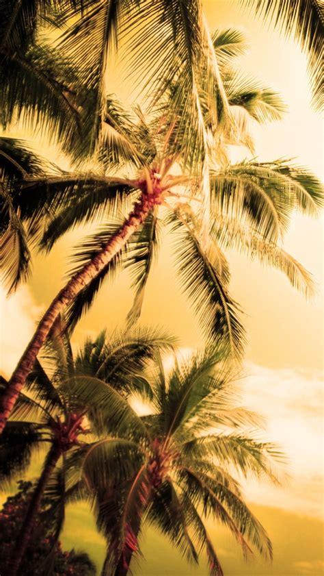 wallpaper for iphone 6 hawaii hawaii sommer palmen iphone hintergrundbilder 640x1136