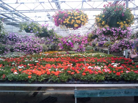 wallpaper of green house greenhouse flowers 5 desktop wallpaper hdflowerwallpaper com