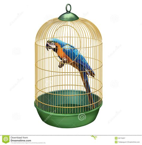 in a cage parrot in a retro cage macaw in bird cage stock illustration illustration of