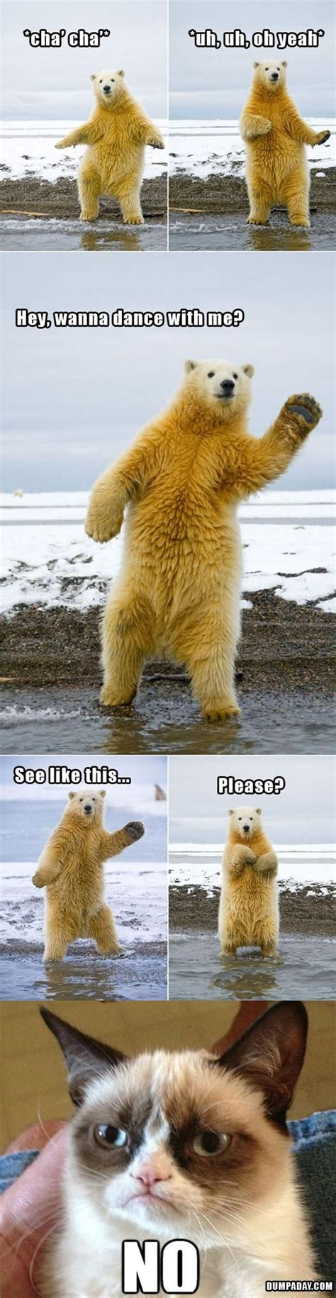 Dancing Polar Bear Meme - funniest cat quotes dance quotesgram