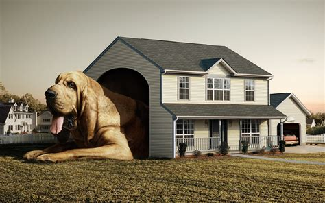 dog in new house dog house big funny hd images new hd wallpapers