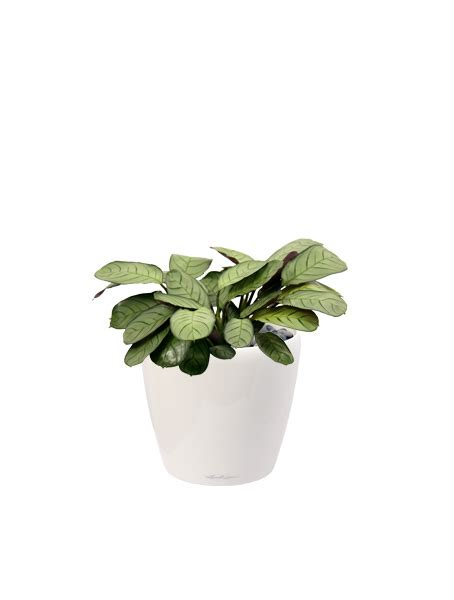 indoor plants nz the urban garden auckland s indoor plant hire specialists