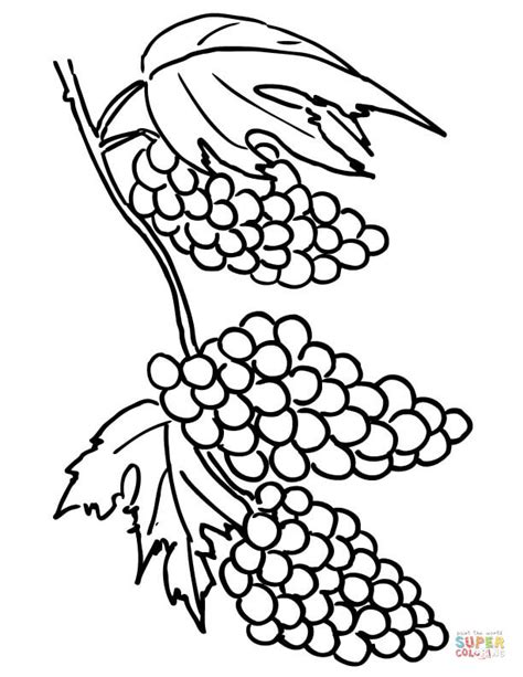 Grapes Clusters Coloring Online sketch template