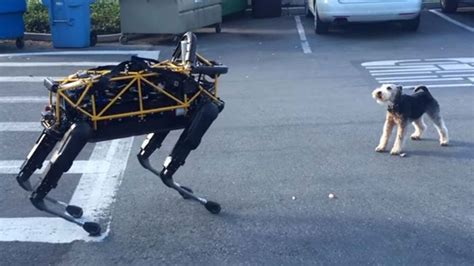 puppy vs real robot vs real is the ultimate canine showdown