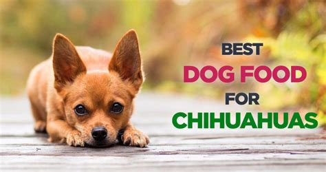 best food for chihuahua best food for chihuahuas choosing the right food