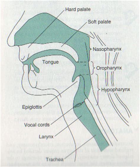 intubation diagram airway causes symptoms treatment airway