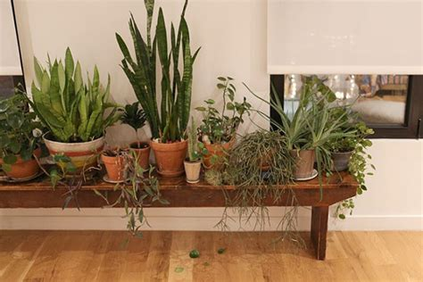 House Plant Planters by Moon To Moon I This Thing With House Plants