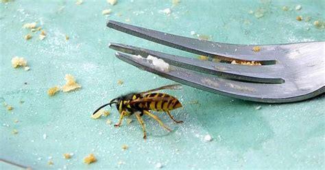 wespen im garten vertreiben wespen im garten vertreiben 28 images wespen im garten