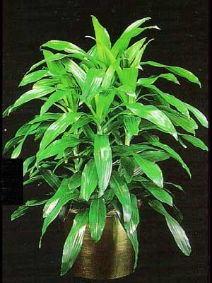 indoor trees low light indoor plants gallery the potted plant scottsdale