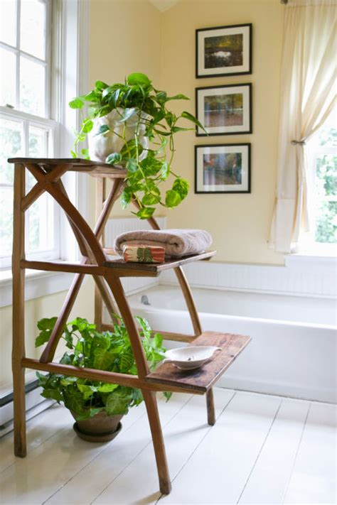 plants to keep in bathroom shower plants the best plants for bathrooms