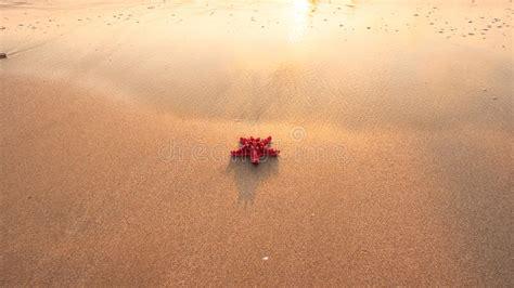sabbia bagnata una stella marina rossa sulla sabbia bagnata alla luce