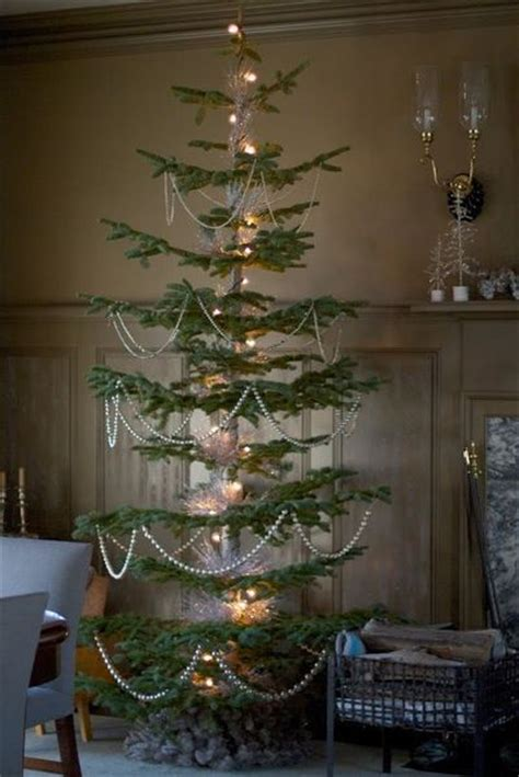 artificial silver tip tree the brown room had two amazing silver tip fir trees these f ideas juxtapost