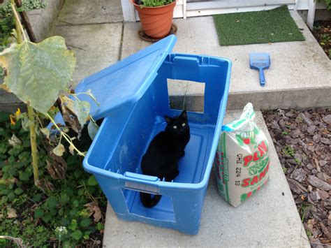 cat using bathroom outside litter box how to make a low cost outdoor cat litter box cats in my yard