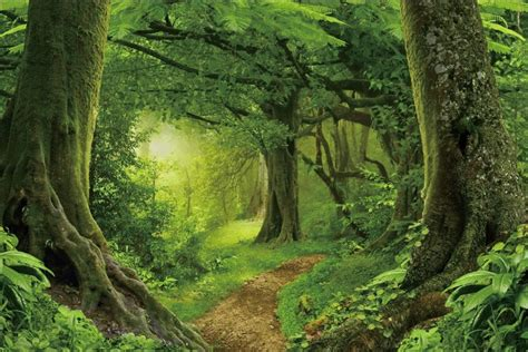 laeacco jungle forest backdrops tree moss green grass cave mystery child baby scenic photo