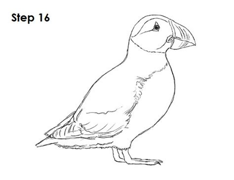 puffin bird coloring page how to draw a puffin