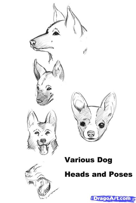how to draw a puppy step by step step 1 how to draw a realistic
