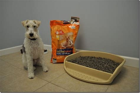 litter box a puppy litter and 20 box from petsmart kennel beds ideas pint