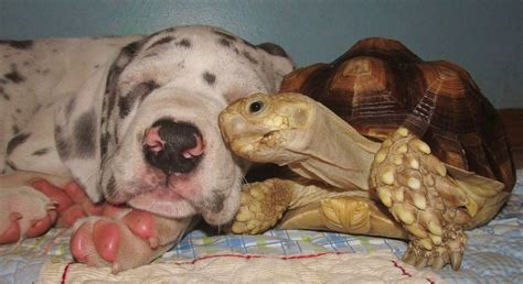puppies and friends puppy makes friends with turtle taildom