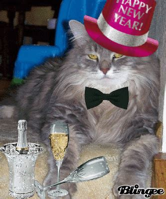 new year s cat picture 79654339 blingee