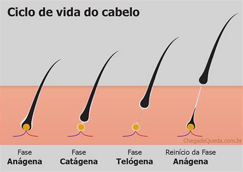 principais do cabelo seguindo a direcao de crescimento do cabelo raio x do cabelo parte 3 fol 237 culo capilar fases do