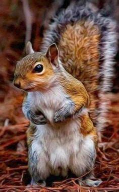 well the squirrels are back commercial script cute baby squirrel ɤ ɤ baby animals ɤ ɤ pinterest
