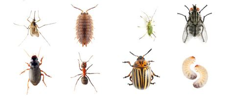 common backyard insects common insect and animal pests by region