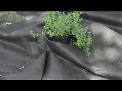 Pros Cons Of The Black Plastic Used In Vegetable Using Black Plastic In Vegetable Garden