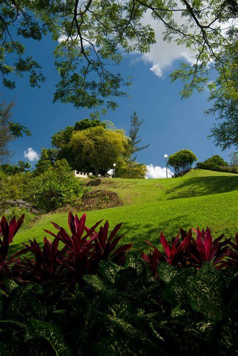Amo Gardens by Borneo 2