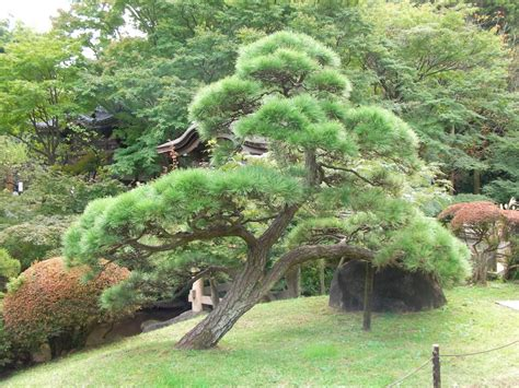 28 best japanese style trees japanese style house interior how to create a balanced