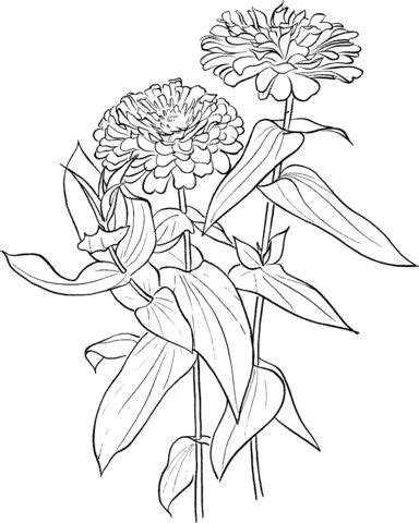 zinnia flower coloring page 17 best images about 黑白线4 on pinterest morning glories