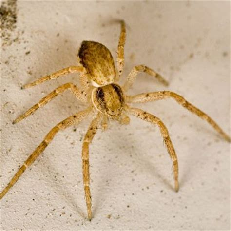 Find In Sa A Guide On How To Spot Poisonous Spiders Family Lifehacks Africa