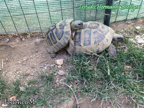 gabbie per tartarughe di terra testudo hermanni scheda riassuntiva tartapedia