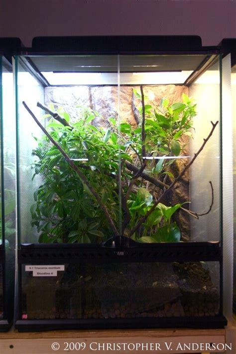 25 Best Images About Vivariums And Terrariums On Pinterest Vivarium Glass Doors