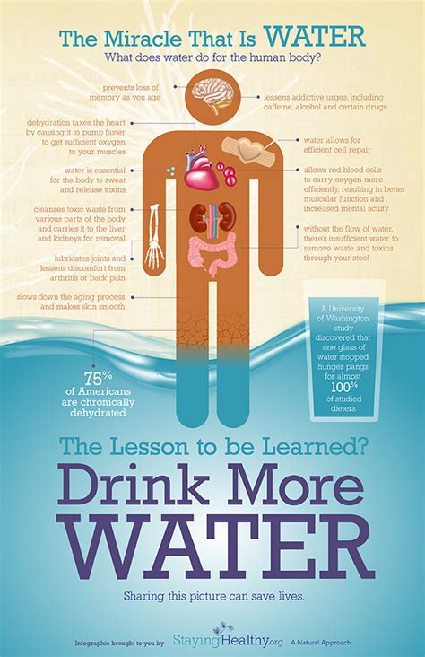 Why Do Kidneys Hurt During Detox by Health Benefits Of Water H2o Not Just For Hydration