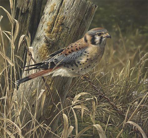 Chandelier Bob Stunning Wildlife Paintings By Denis Mayer Jr