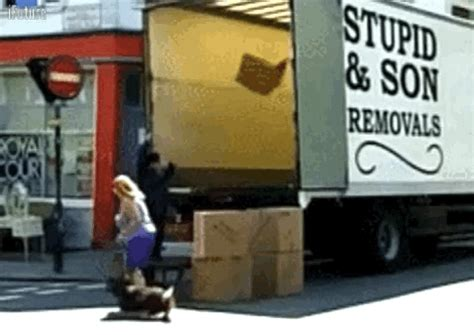 and gifs do your movers what they