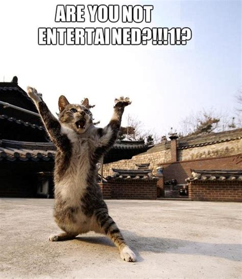 Are You Not Entertained Meme - image 219420 are you not entertained know your meme
