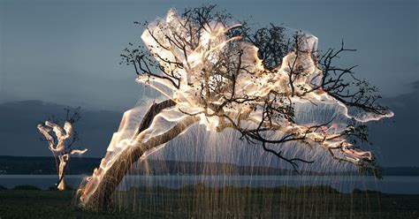 how to photograph a tree with lights light drips from trees in exposure photos by vitor