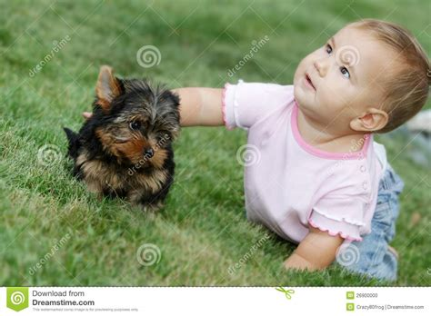 yorkie and baby baby child and terrier stock photo image 26900000