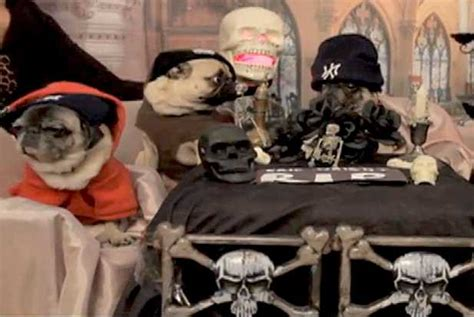 bone pugs n harmony pugs encourage you to get your finances in order popdust