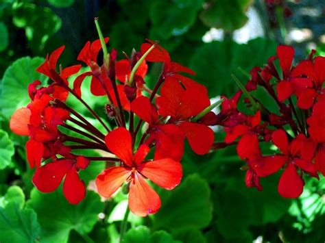 fiori vaso fiori da vaso fiorista