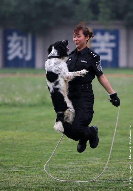how are k9 dogs trained base in beijing